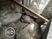 Premium Small Cute Tortoise For Sale | Reptiles for sale in Lagos State, Lekki Phase 1