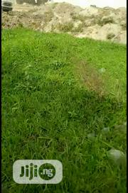 Dry Land For Sale   Land & Plots For Sale for sale in Lagos State, Epe