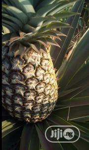 Make Above 4 Million Yearly From One Acre Of Pineapple Farm | Meals & Drinks for sale in Ogun State, Abeokuta North