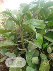 Low Spam Calm Natural Herbal Tea | Sexual Wellness for sale in Ogun State, Abeokuta South