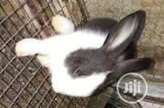 Rabbits For Sell | Livestock & Poultry for sale in Lagos State, Ikorodu