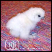 Silky Young Chick   Livestock & Poultry for sale in Kano State, Fagge