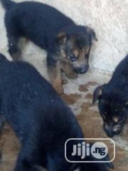 Baby Female Purebred German Shepherd Dog | Dogs & Puppies for sale in Ogun State, Ado-Odo/Ota