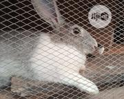 Promo Price#4000 | Other Animals for sale in Oyo State, Ibadan