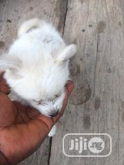 Baby Male Mixed Breed American English Coonhound | Dogs & Puppies for sale in Lagos State, Oshodi-Isolo