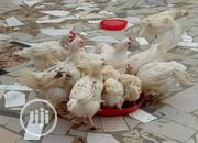Biya Farms In Collaboration With Bank Of Agriculture | Livestock & Poultry for sale in Plateau State, Jos