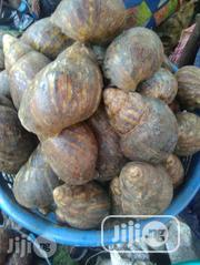 Snails Supply | Other Animals for sale in Lagos State, Agege
