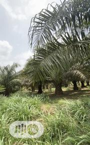 Agric Land In Ogun State | Land & Plots For Sale for sale in Ogun State, Odeda