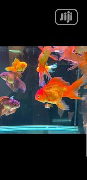 Exotic Fish Supply | Fish for sale in Lagos State, Lekki Phase 1