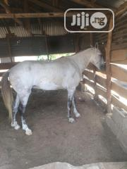 Horse For Sale   Other Animals for sale in Lagos State, Ojo