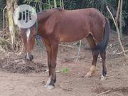 Young Horse For Sale | Other Animals for sale in Oyo State, Ibadan