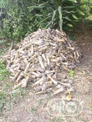 Treated Plantain Sucker, Elephant Giant Variety, Free Delivery   Feeds, Supplements & Seeds for sale in Lagos State, Ikorodu