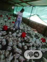 Broilers Available For Sale | Livestock & Poultry for sale in Imo State, Owerri