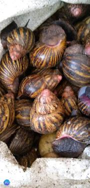 Nutritional Snail | Other Animals for sale in Lagos State, Victoria Island