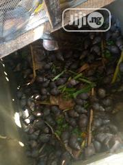 Big Snails Avalible for Sale | Other Animals for sale in Oyo State, Olorunsogo