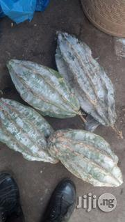 Ugu Seeds Hybrids | Feeds, Supplements & Seeds for sale in Kaduna State