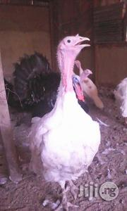 Life Turkey 10kg Plus | Livestock & Poultry for sale in Lagos State, Kosofe
