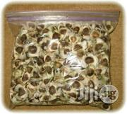 Organic Moringa Olifera Seeds   Feeds, Supplements & Seeds for sale in Plateau State, Jos