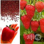 Strawberry Seeds | Feeds, Supplements & Seeds for sale in Plateau State, Jos