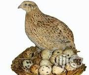 Quail Bird And Egg | Meals & Drinks for sale in Lagos State, Ikotun/Igando