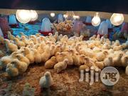 Pullet, Boiler, Cockrel, Foreign And Local Turkey | Livestock & Poultry for sale in Lagos State, Ojo