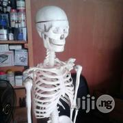 Human Skeleton | Manufacturing Equipment for sale in Abia State, Aba North