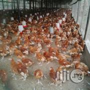 Dekoraj Good Point of Lay Birds | Livestock & Poultry for sale in Abuja (FCT) State, Dei-Dei