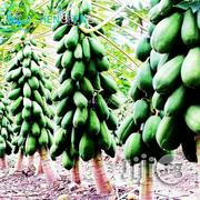 Vietnamese Dwarf Cylindrical Papaya | Feeds, Supplements & Seeds for sale in Kaduna State, Kaduna