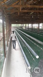 Battery Cage For Successful Farmers | Farm Machinery & Equipment for sale in Delta State, Sapele