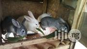 BUNNIES For Sale | Other Animals for sale in Ogun State, Ado-Odo/Ota