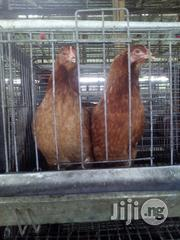 Point Of Lay Pullet | Livestock & Poultry for sale in Oyo State, Ibadan