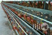 Strong Fibrecated Battery Cage | Farm Machinery & Equipment for sale in Rivers State, Ikwerre